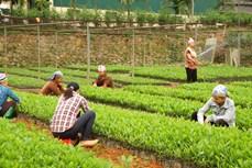 Hiệu quả từ trồng rừng vụ Xuân ở vùng cao Yên Bái