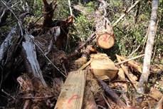 Áp lực giữ rừng ở Tây Nguyên (Bài 1)