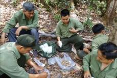 Áp lực giữ rừng ở Tây Nguyên (Bài 3)
