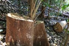 Áp lực giữ rừng ở Tây Nguyên (Bài cuối)