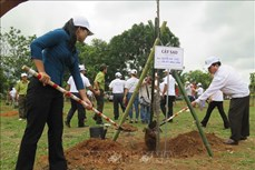 Kon Tum phát động Tết trồng cây đời đời nhớ ơn Bác Hồ