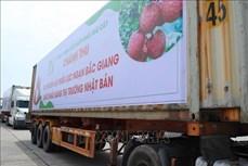 Bộ Công Thương hỗ trợ quảng bá hình ảnh và kết nối giao dịch xuất khẩu vải thiều