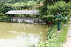 Lão nông Vũ Văn Lung đi đầu trong phát triển kinh tế trang trại ở Tuyên Quang