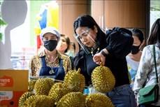 Thái Lan phát triển hộp chống mùi để bảo quản sầu riêng khi vận chuyển