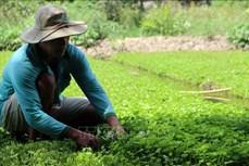 Nhiều dự án mời gọi đầu tư vào nông nghiệp, nông thôn tỉnh Kiên Giang