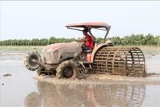 Gieo cấy lúa bằng máy giúp nông dân Đồng Tháp giảm lượng giống, tăng thu nhập