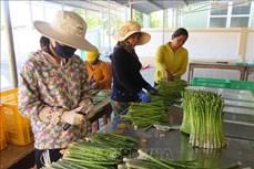 Ninh Thuận: Củng cố và phát huy hiệu quả kinh tế tập thể