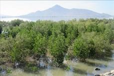 Ninh Thuận nhân rộng mô hình bảo vệ rừng gắn với phát triển sinh kế bền vững