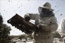 Bảo vệ và duy trì tổ ong nhờ công nghệ robot và AI