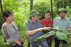 Yên Bái: Hơn 29 tỷ đồng tháo gỡ khó khăn cho sản xuất nông nghiệp