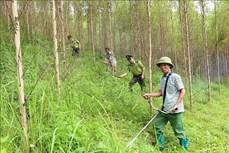 Bắc Giang khuyến khích phát triển rừng sản xuất