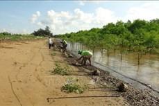 Trà Vinh chuyển đổi gần 3.800 ha rừng phòng hộ ít xung yếu thành rừng sản xuất