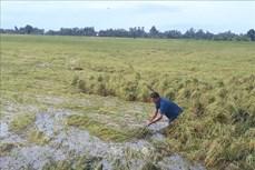 270 căn nhà và hàng trăm ha lúa màu ở Sóc Trăng bị ảnh hưởng do mưa dông
