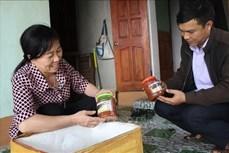 Tạo thương hiệu cho sản phẩm mắm tép Hà Yên