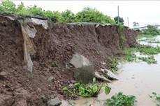 Trà Vinh đầu tư 88 tỷ đồng xây kè chống sạt lở bờ sông Cổ Chiên