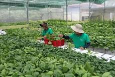 Quảng Ngãi hỗ trợ doanh nghiệp đầu tư vào nông nghiệp sạch