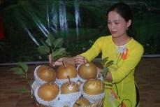 Lễ đón nhận nhãn hiệu chứng nhận lê Đông Khê