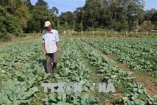 Trà Vinh khuyến khích nông dân mở rộng diện tích và đa dạng các loại cây màu
