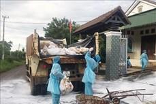 Quảng Trị công bố dịch bệnh cúm gia cầm H5N6 tại xã Vĩnh Lâm