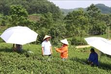 Phát triển bền vững thương hiệu sản phẩm chè Thái Nguyên