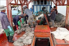 Chuyển đổi ngành nghề cho cư dân vùng ven biển ở Cà Mau còn nhiều nút thắt cần tháo gỡ