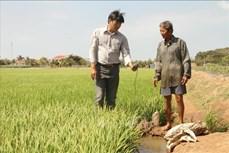 Sóc Trăng chủ động phòng, chống nguy cơ hạn, mặn xâm nhập trong mùa khô 2020-2021