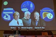 Giải Nobel Y học 2020 vinh danh những đóng góp quan trọng trong cuộc chiến chống bệnh viêm gan