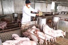 Phê duyệt Chiến lược phát triển chăn nuôi giai đoạn 2021-2030, tầm nhìn 2045