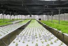 Quảng Trị thu hút trên 860 tỷ đồng đầu tư vào nông nghiệp công nghệ cao