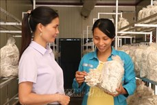 Mô hình trồng nấm làm giàu của chị Lương Thị Kim Ngọc mở hướng đi mới cho phong trào phụ nữ phát triển kinh tế ở huyện Gia Bình