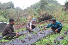 Chú trọng phát triển đảng viên người dân tộc thiểu số ở vùng cao Lai Châu