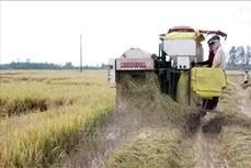Kiên Giang: Nhân rộng mô hình sản xuất lúa theo cánh đồng lớn gắn với tiêu thụ