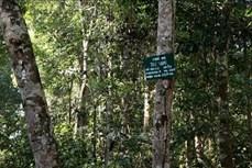 Đắk Nông nỗ lực nâng cao độ che phủ rừng