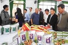 Thành phố Kon Tum đánh giá, phân loại sản phẩm OCOP