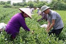 Chương trình mỗi xã một sản phẩm: Động lực phát triển kinh tế vùng nông thôn