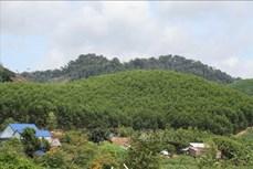 Đắk Lắk trồng mới được gần 2.400 ha rừng