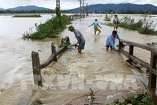 Thủ tướng chỉ đạo xuất cấp hạt giống hỗ trợ 4 tỉnh bị thiệt hại do thiên tai
