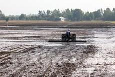 Sóc Trăng khuyến cáo nông dân xuống giống sớm để né hạn mặn cuối vụ