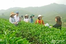 Nghệ An phát triển các mô hình du lịch nông nghiệp