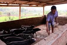 Ông Bạc Cầm Nói thực hiện hiệu quả chuyển đổi cơ cấu cây trồng, vật nuôi