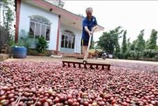 Buôn làng ở Đắk Lắk khởi sắc