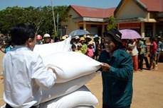 Đắk Nông hỗ trợ gần 500 tấn gạo cho người nghèo trước Tết Nguyên đán Tân Sửu
