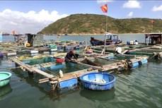 Bình Định khuyến cáo nông dân không nên thay đổi trình tự nuôi thủy sản nước lợ