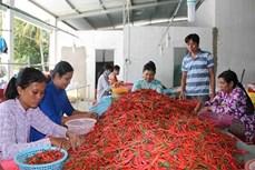 Trà Vinh có nhiều chính sách hỗ trợ hợp tác xã nông nghiệp