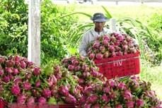 Hiệu quả từ Đề án phát triển 15.000 hợp tác xã - Thực tiễn tại Bình Thuận