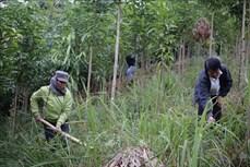 Lai Châu dự kiến trồng hơn 1.600 ha rừng trong năm 2021
