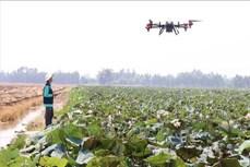 Nhân rộng việc phun thuốc bảo vệ thực vật bằng thiết bị bay không người lái ở Đồng Tháp