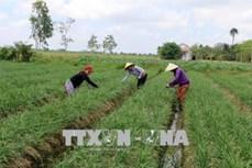 Sóc Trăng chuyển dịch cơ cấu cây trồng thích ứng với biến đổi khí hậu