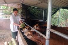 Người cựu chiến binh đi đầu trong phong trào làm kinh tế giỏi của tỉnh Sơn La