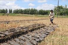 Trà Vinh chuyển hơn 2.000 ha đất kém hiệu quả sang trồng cây có giá trị